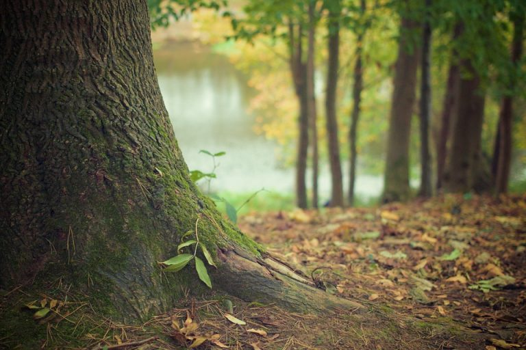 budget sewer tree root dangers and plumbing